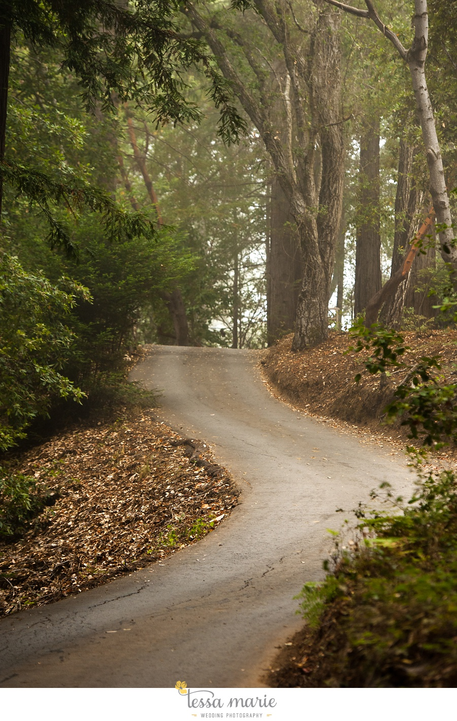 destination_wedding_sequoia_retreat_center_red_wood_forrest_california_coast_0002