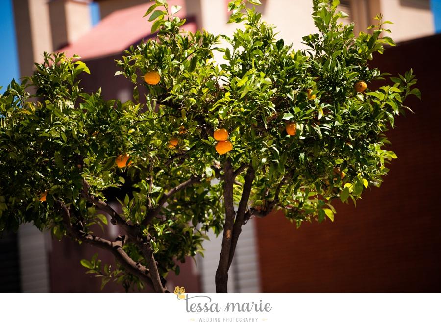 barcelona_destination_wedding_photographer_landscape_imagery_spain_fine_art_european_landscape_details_0050