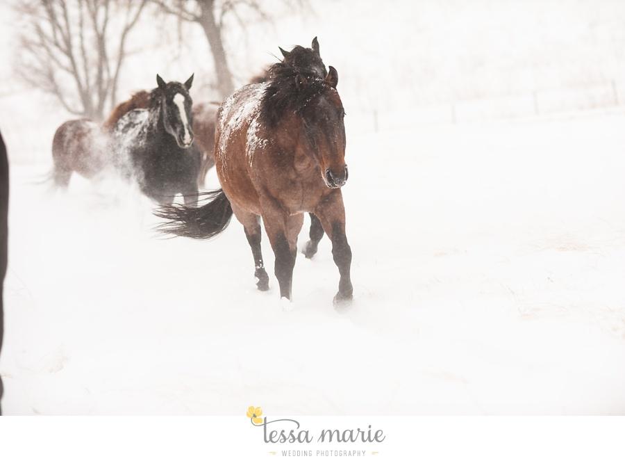 nebraska_ranch_blizzard_horses_0004