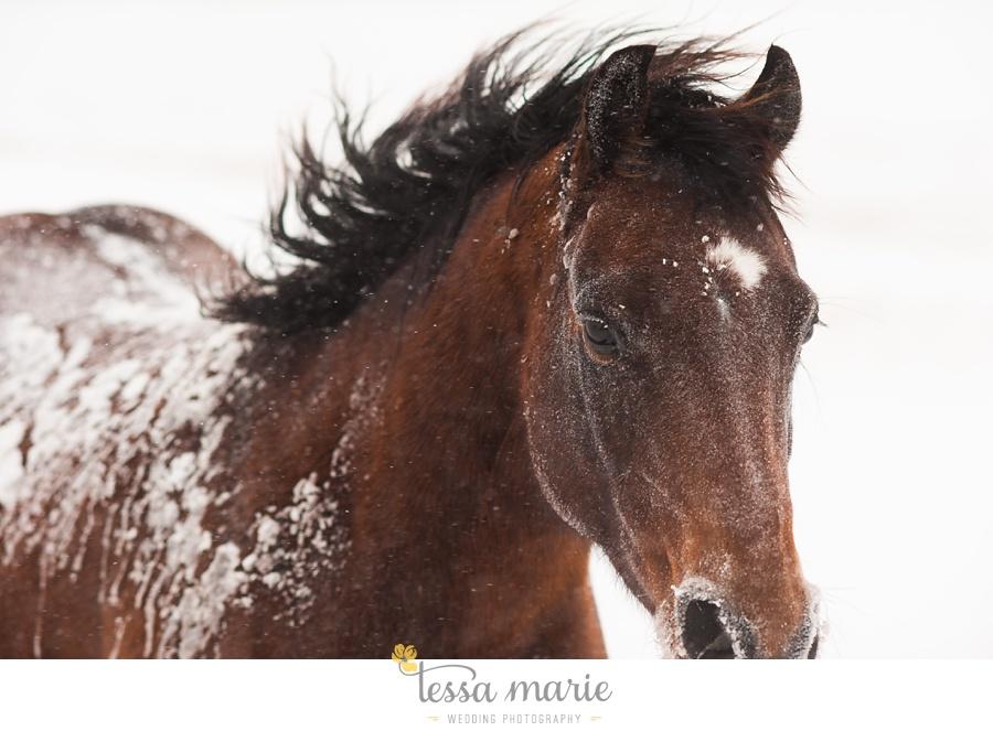 nebraska_ranch_blizzard_horses_0006