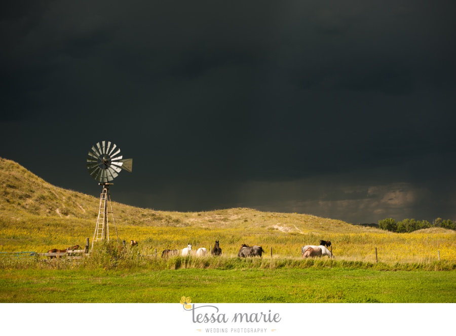 western_nebraska_storm_horses_brood_mares_wild_sunflowers_0003