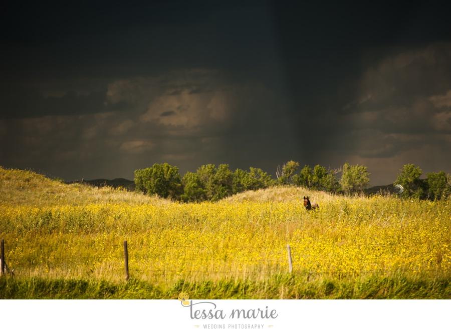 western_nebraska_storm_horses_brood_mares_wild_sunflowers_0004