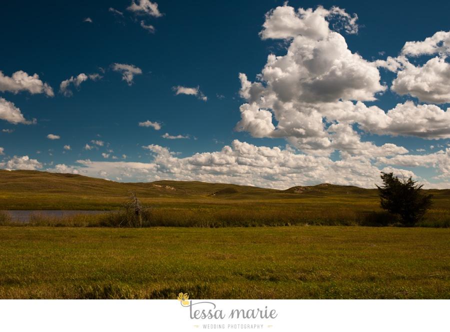 western_nebraska_storm_horses_brood_mares_wild_sunflowers_0006