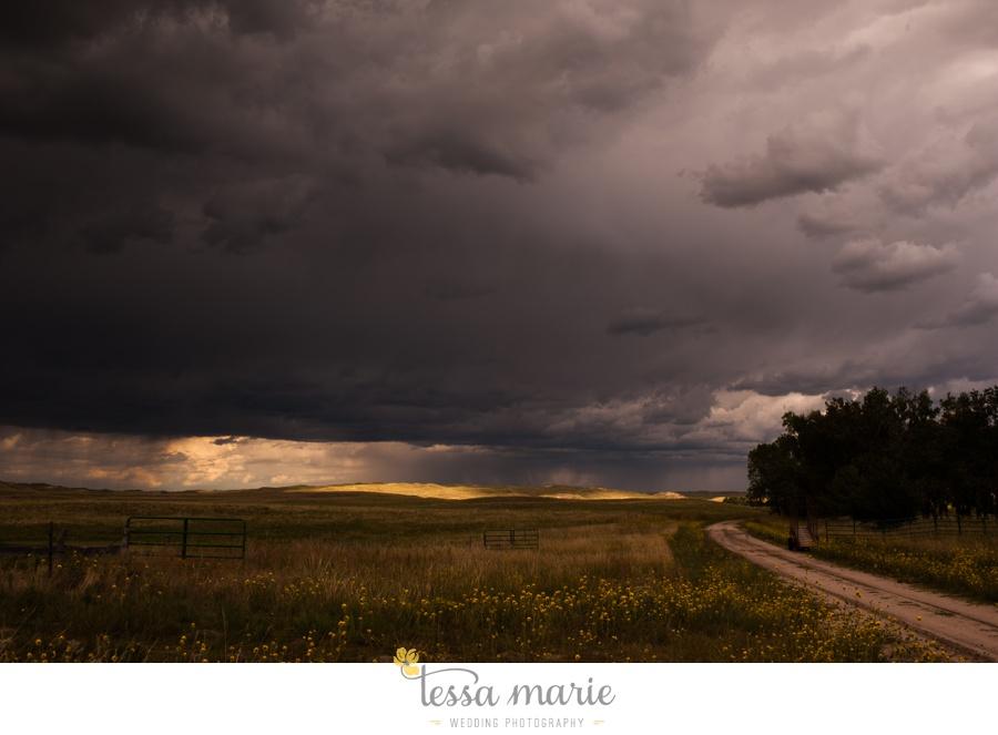western_nebraska_storm_horses_brood_mares_wild_sunflowers_0007