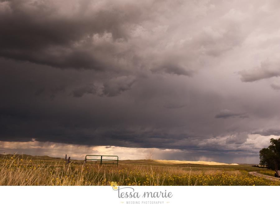 western_nebraska_storm_horses_brood_mares_wild_sunflowers_0008