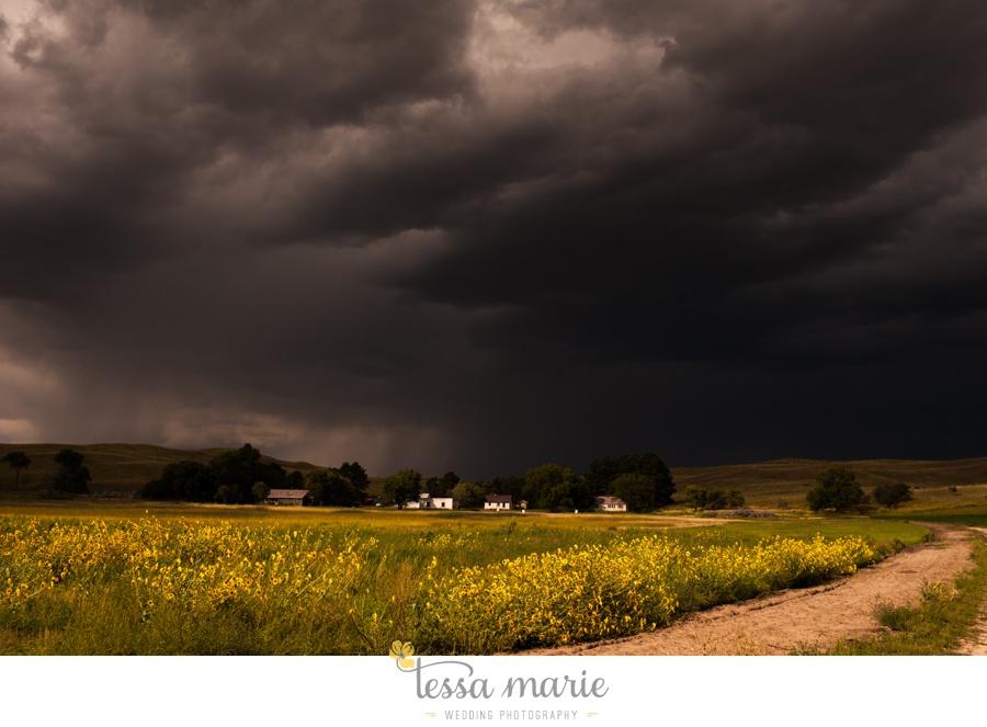 western_nebraska_storm_horses_brood_mares_wild_sunflowers_0009
