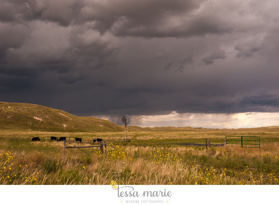 western_nebraska_storm_horses_brood_mares_wild_sunflowers_0015