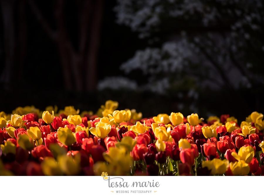 119_kristen_jonathan_wedding_bontanical_gardens