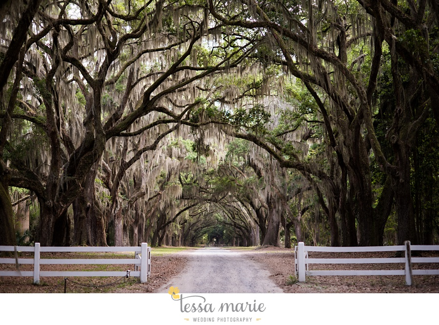 savannah_destination_wedding_photographer_wormsole_elopement_tessa_marie_weddings_essence_of_australia_gown_0075