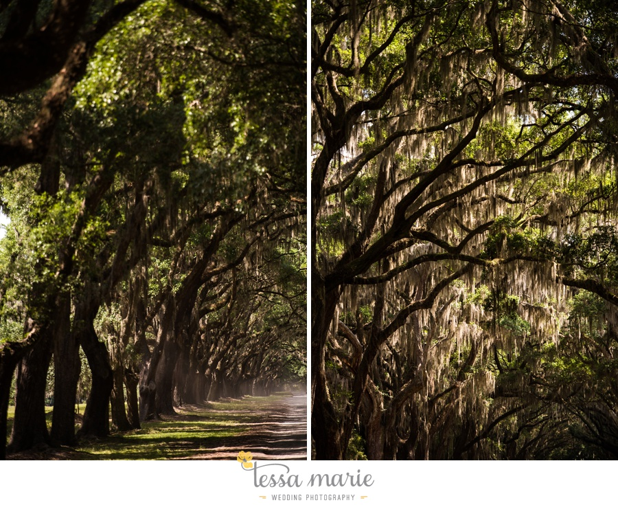 savannah_destination_wedding_photographer_wormsole_elopement_tessa_marie_weddings_essence_of_australia_gown_0076