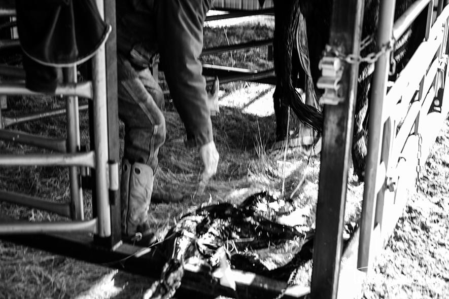 jensen_ranch_new_life_ranching-4